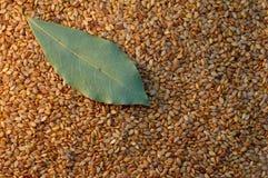 Seeds & bay leaf. Golden seeds and bay leaf Stock Photography