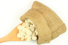 Seeds Big Lima (Butter) bean. Stock Images
