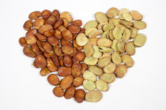 Seeds of broad bean disposed forming the shape of heart Royalty Free Stock Images