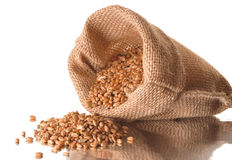 Seeds of cereal Royalty Free Stock Photography