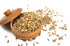 Seeds of cereal crops on white background Stock Image