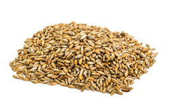 Seeds of cereal crops on white background Royalty Free Stock Photos