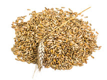 Seeds of cereal crops on white background Stock Photography