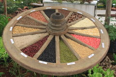 Seeds circle in Chiangmai botanical garden Royalty Free Stock Photography