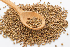 Seeds of coriander in a wooden spoon. Cilantro isolated. Coriandrum sativum. Common seeds. Seeds of coriander on a white background in a wooden spoon. Cilantro stock images