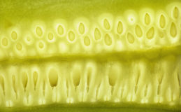 Seeds of cucumber Royalty Free Stock Image