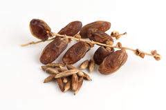 Seeds and Date Palm (Phoenix dactylifera). Stock Photo