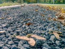 Fall close up of park gravel. Seeds and dead fall leaves scattered over gravel path through a forest in autumn Stock Photography