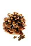 Seeds and disclosed pinecone. Stock Photography