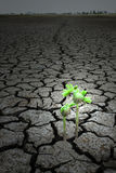 Among the seeds dry on earth concept hope Royalty Free Stock Photo