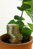 Seeds of Economic Growth Royalty Free Stock Image