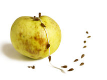 Seeds escaping down the rope from the spoiled apple. Seeds escaping down the rope of spoiled apples, like rats fleeing a sinking ship or persons of bad places stock illustration