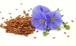 Seeds and flowers of flax Royalty Free Stock Image