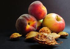 Seeds and Fruits. Apple, peach and stone seeds on dark background Stock Photos