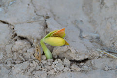 Seeds germinate Stock Photography