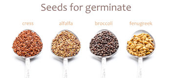 Seeds for germination Stock Photo