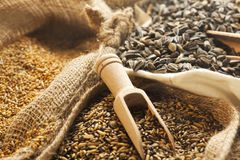 Seeds and grains in burlap bags Stock Photos