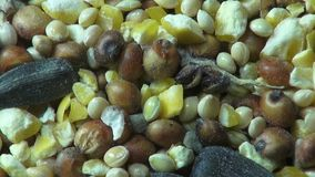 Seeds, Grains, Pet Foods, Grains Stock Photo