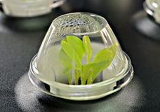 Seeds Growing in a Starter Terrarium Stock Photos