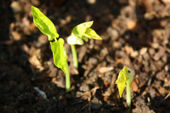 Seeds of Growth Royalty Free Stock Image