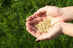 Seeds and hand Royalty Free Stock Photos