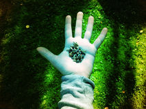 Seeds In Hand Colorized. Handful of seeds in hand. Picture is colorized in photoshop stock photography