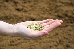 Seeds in a Hand Royalty Free Stock Photo