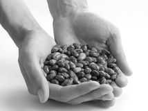 Seeds in hands Royalty Free Stock Image