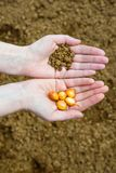 Seeds in Hands Stock Images