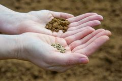 Seeds in Hands Stock Image