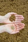 Seeds in Hands Royalty Free Stock Photography