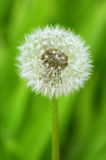 Seeds of Hope Royalty Free Stock Images