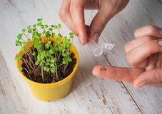 Seeds In A Hand. Planting Seeds In The Spring. Royalty Free Stock Photography