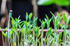 Seeds that just regenerate Royalty Free Stock Photos
