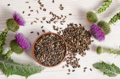 Seeds of a milk thistle with flower Stock Images