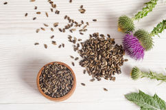 Seeds of a milk thistle with flowers Stock Photography