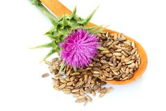 Seeds of a milk thistle with flowers Silybum marianum, Scotch Th. Istle, Marian thistle in a wooden spoon stock image