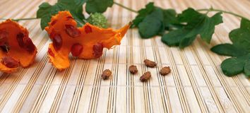 Seeds momordika plant in the Cucurbitaceae family Royalty Free Stock Photos