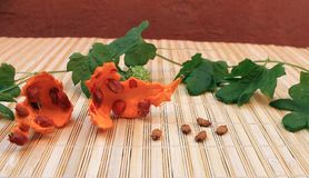 Seeds momordika plant in the Cucurbitaceae family Stock Photography