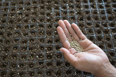 Seeds in nursery tray Stock Photography