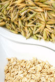 Seeds of oats Royalty Free Stock Photography