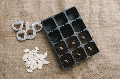 Seeds planted in the potting shed. Horizontal Royalty Free Stock Photography
