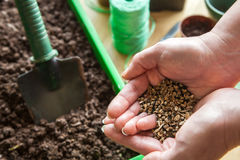 Seeds For Planting in Gardener's Cupped Hands - Ready for Spring Royalty Free Stock Photo
