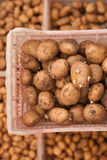 Seeds of potato Stock Images