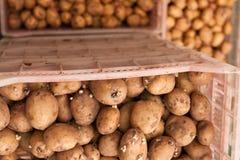 Seeds of potato Royalty Free Stock Photos