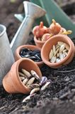 Seeds in pots to sowing Royalty Free Stock Photography