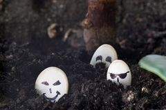 Seeds of pumpkin with painted faces thrust into the ground for planting, different emotions on faces. Seeds of pumpkin with painted faces thrust into the ground Stock Images