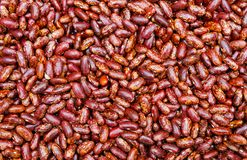Seeds or red beans Royalty Free Stock Photos