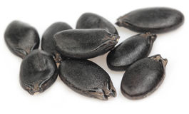 Seeds of ridge gourd Stock Photos