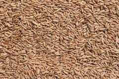 Seeds of rye closeup Royalty Free Stock Photography